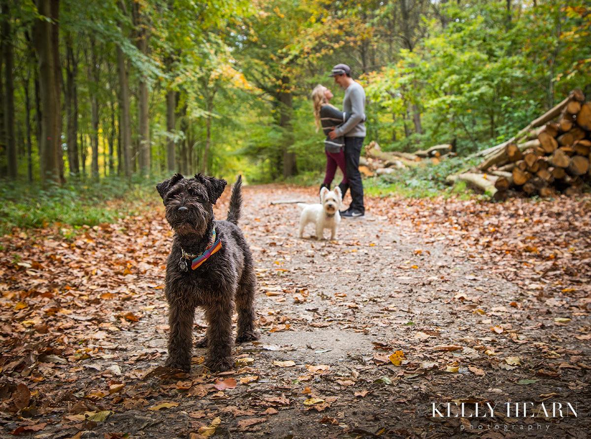 AUT_Portrait-Autumn-Dogs.jpg#asset:2875